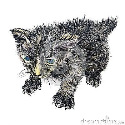 Hand-drawn newborn kitten