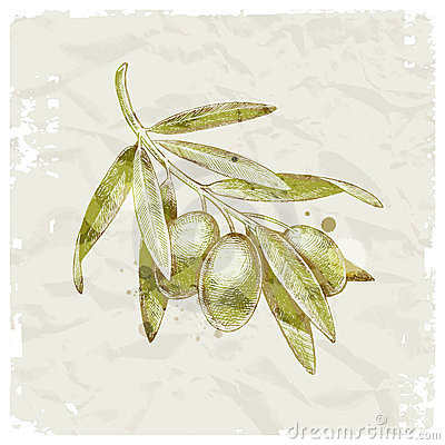 Hand drawn olive branch