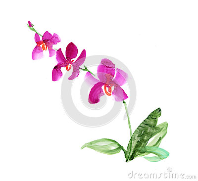 Free Hand Drawn Orchid Flower. Stock Photo - 75293810