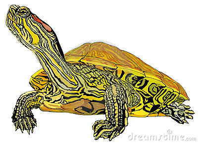 Hand-drawn Pet Trachemys Scripta Elegans Turtle Stock Images - Image: 19462464