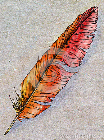 Hand drawn phoenix feather