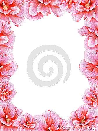 Hand-drawn pink hibiscus frame