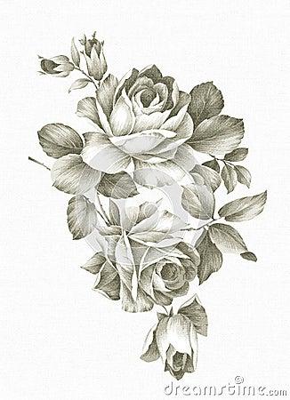 Rose Drawn