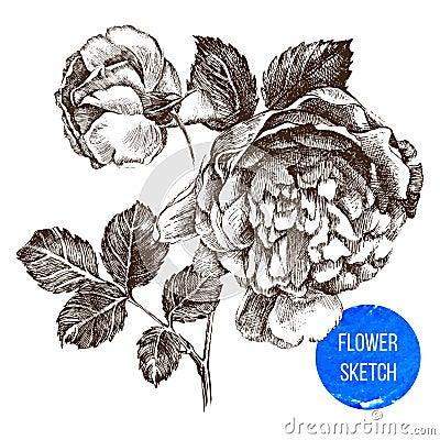 Hand drawn rose flower