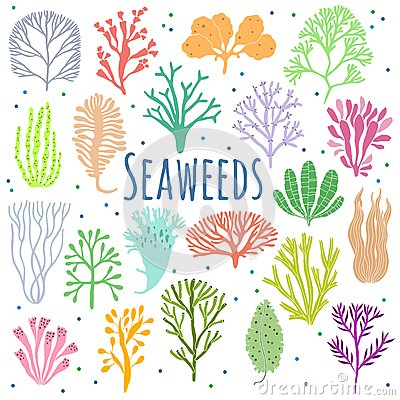 Free Hand Drawn Seaweed, Coral Set . Sea Plant Icons Stock Photography - 76561142
