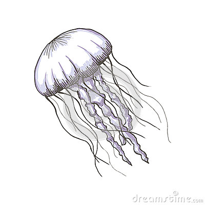 Hand drawn sketch isolated jellyfish, marine animals Vector Illustration
