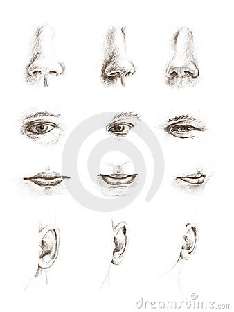 Hand drawn sketches of eyes, ears, lips and noses
