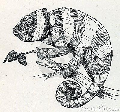 Free Hand Drawn Smiling Chameleon Stock Photos - 40609293