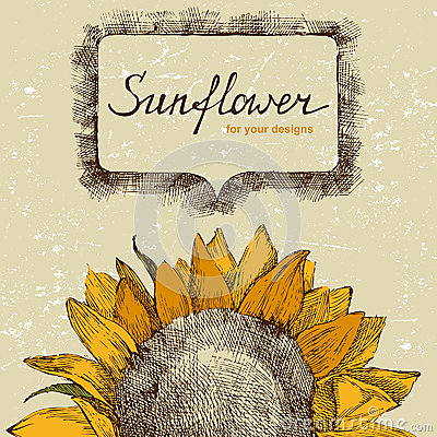 Free Hand Drawn Sunflower Royalty Free Stock Photos - 38562938