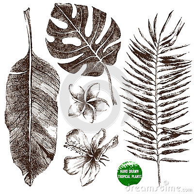 Free Hand Drawn Tropical Leaves And Flowers Royalty Free Stock Photos - 45168778