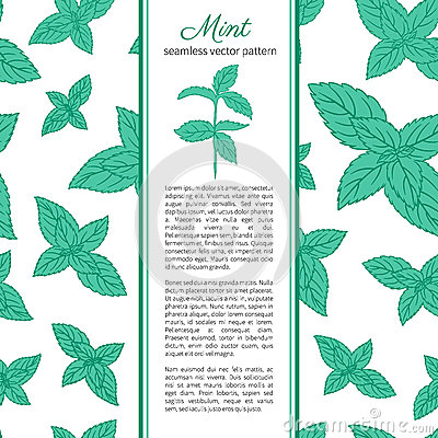 Hand drawn vector seamless patterns with mint leaves, peppermint, spicy herbs, kitchen texture, Doodle cooking Vector Illustration