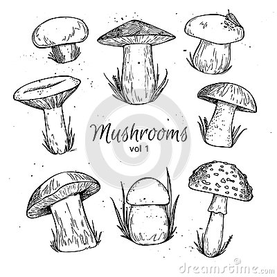 Free Hand Drawn Vector Vintage Illustration - Mushrooms. Royalty Free Stock Image - 59182316