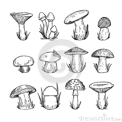 Free Hand Drawn Vector Vintage Illustration - Mushrooms. Royalty Free Stock Images - 60069599