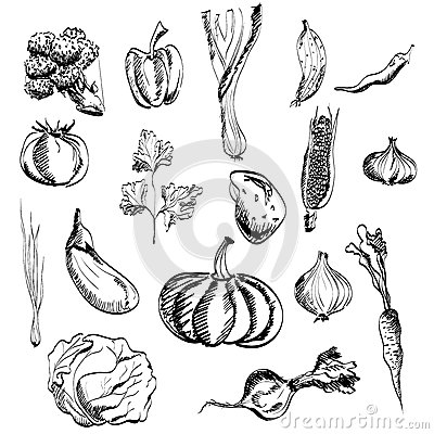 Free Hand Drawn Vegetables Set Royalty Free Stock Photos - 34157238