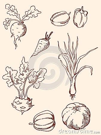 Hand drawn vintage vegetables