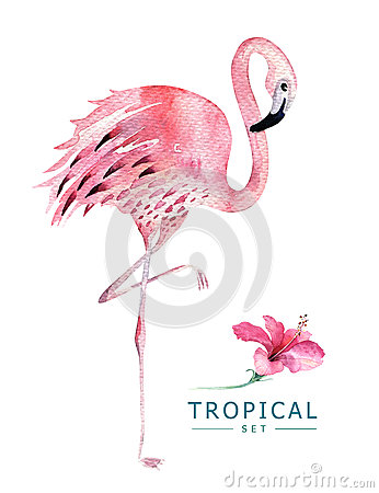 Free Hand Drawn Watercolor Tropical Birds Set Of Flamingo. Exotic Bird Illustrations, Jungle Tree, Brazil Trendy Art. Perfect Stock Photography - 91854312