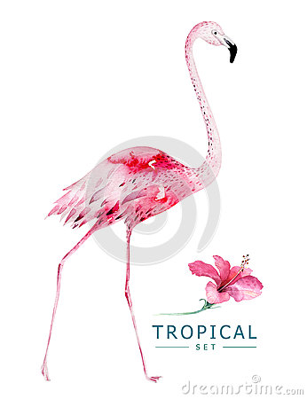 Free Hand Drawn Watercolor Tropical Birds Set Of Flamingo. Exotic Bird Illustrations, Jungle Tree, Brazil Trendy Art. Perfect Royalty Free Stock Photos - 91854478