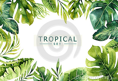 Hand drawn watercolor tropical plants background. Exotic palm leaves, jungle tree, brazil tropic borany elements Stock Photo