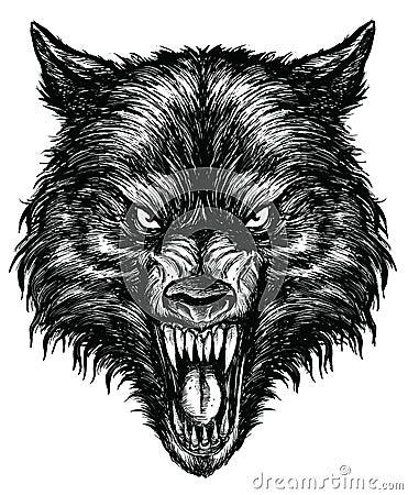 Free Hand Drawn Wolf Linework Vector Stock Photos - 31718763