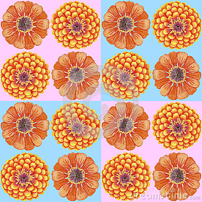 Hand-drawn zinnia pattern