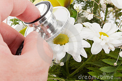 Hand examining flower by stethoscope
