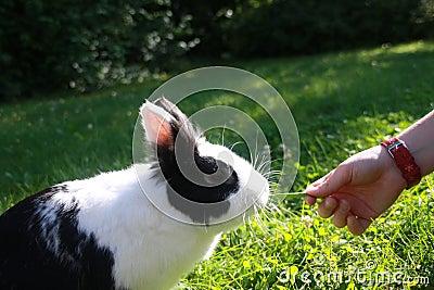 Hand fed rabbits