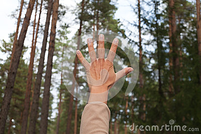 Hand and forest.