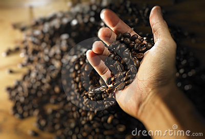 Hand full of coffee bean