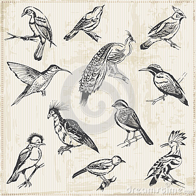 Reichen sie gezogene vögel für entwurf und einklebebuch ein