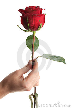 Free Hand Giving Or Holding Rose, Isolated Royalty Free Stock Photo - 6587165