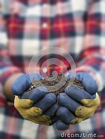 Hand Holding Dirt - Yellow Daisy