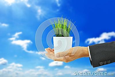 Hand holding flower pot with green grass