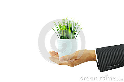 Hand holding flower pot with green grass