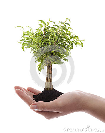 Hand holding green tree