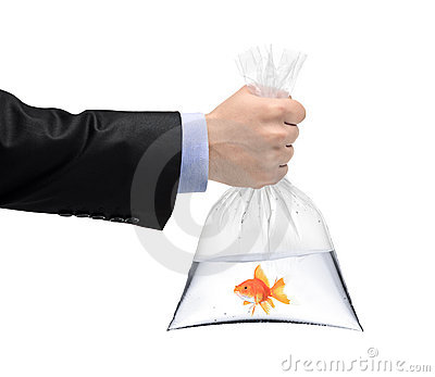 A hand holding a plastic bag with a golden fish