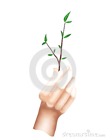 A Hand Holding A Short Branch with Green Leaves