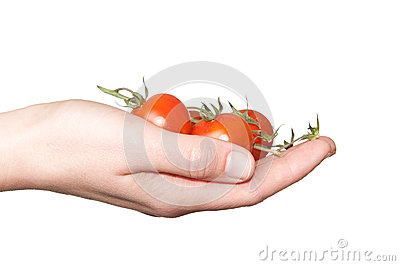 Hand holding small tomatoes