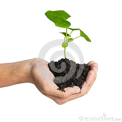 Hand holding a tree for giving life to the Earth
