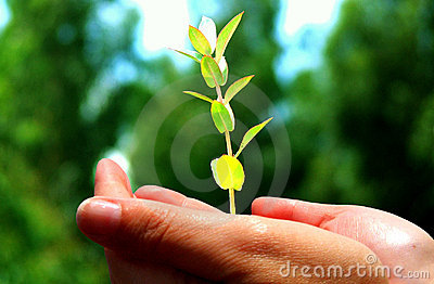 Hand holding tree seedling