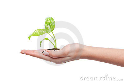 Hand holding young plant