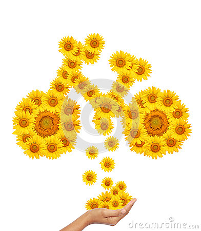 Hand idea with sunflower bicycle image.