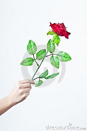 Hand offering rose