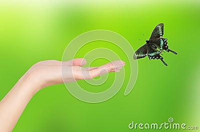 Hand Papilio paris