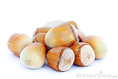 Hand-picked hazelnut