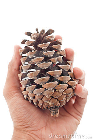 Hand With Pinecone
