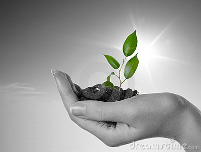 Hand with a plant on a background of the blue sky
