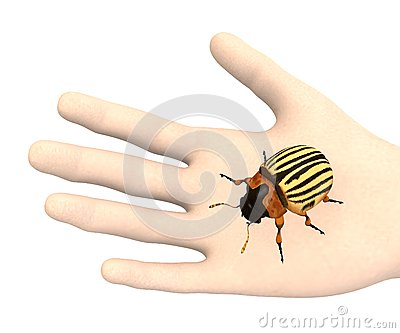 Hand with potato beetle
