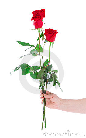 Hand with the rose isolated on a white
