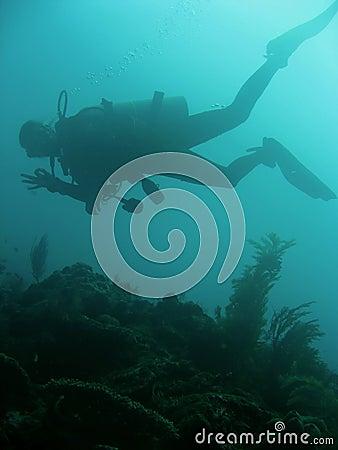 Hand signals scuba diver sipadan