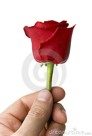 Hand with single red rose